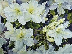 watercolor paintings of transparent flowers - Google Search