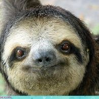 "I love sloths, and there was a great episode of ""Too Cute"" on Animal Planet that featured them."