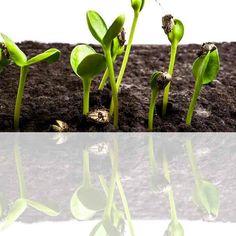 Le printemps est arrivé, c'est le bon moment pour planter des graines dans le potager. Aujourd'hui je vous propose un [DIY & Activités Manuelles enfants] basé sur l'observation de la germination : de la graine à la plante à utiliser en parallèle avec des [Cartes de Nomenclature Montessori]. Nous vous proposons ce DIY en temps réel, nous le débutons aujourd'hui …