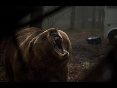 Grizzly Trailer 2014 HD Billy Bob Thornton James Marsden Piper Perabo  This is a new Thomas Jane movie that I REALLY want to see!