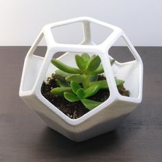 (1)+Cactus+Planter,+4.25+inch+Tall+(10.8+cm) ++Planting+&+Care+Instructions ►+DESIGN:+Futurist+Terrarium+–+Windowed+Dodecahedron+Planter ►+DETAILING:+Smooth+surface,+round+corners,+open+air+polyhedron,+wire-frame+trellis ►+ARTIST+NOTES: A+futuristic+tribute+to+the+platonic+geometry+studi...