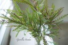 Resendiz Brothers Protea Farm - Brunia Albiflora