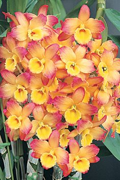 ryggmassage stockholm orkide thai