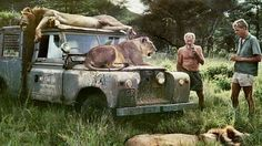 Land Rover and lions. Dos Equis, Land Rover Off Road, Best 4x4, Out Of Africa, My Land, Vintage Trucks, African Safari, Land Rover Defender, Landing