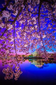 Travel Japan ~ Dreamy Nature