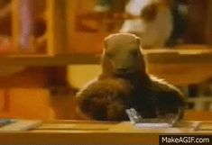 Chapter 9 - Emotional appeals - This ad for Milka has been very famous in France using anthropomorphism via the famous cow and woodchucks which prepare the chocolate. It shows a welcoming atmosphere, happiness and joy. Gifs, Bank Holiday, Childhood Memories, British, Funny, Milka Chocolate, School Tv, Core French, French Movies