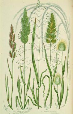 grasses.   ECKMANN STUDIO COM