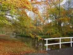 Herfst in Den Haag by Jolle via flickr