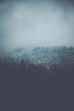 iPhone Wallpaper 5, 6 - Winter Cold Mist Forest Trees