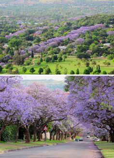 Sjoesjoe in Africa: Jacaranda trees Pretoria Places To Travel, Places To Visit, Out Of Africa, Africa Travel, Nature Pictures, Continents, Wonders Of The World, South Africa, Beautiful Places