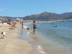 Playa de la Rovira en Ampuria Brava (Girona) dónde los perros pueden estar libremente.