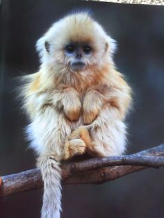 baby monkey - this is going to be the influence for my logo...