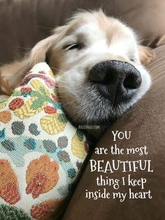 Golden Retriever Beautiful Thing Valentine's Day Card by #AugieDoggyStore