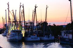 Shrimping is big business here on Fort Myers Beach. We have the largest commercial fishing fleets in the Gulf of Mexico!