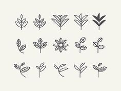 Tribute to organic origins//Leaf exploration for an organic tea re-branding I've been currently working on. Finalized leaf is here. Web Design, Icon Design, Logo Design, Graphic Design, Leaves Sketch, Tea Logo, Tea Brands, Branding, Corporate Design