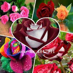 ビッグセール美しい虹100ローズ種子マルチカラーローズ種子ローズフラワーの種