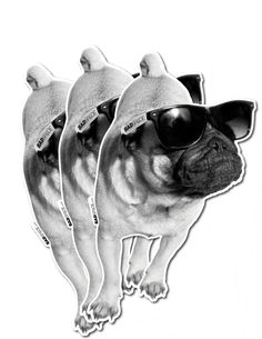 Pug Stickers 3 Stickers Set Cute pug puppy decals by badspade, $10.00