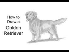 Learn how to draw a dog how to draw a golden retriever is easy in this step by step cartoon dog drawing lesson by cheri. Golden retriever p. Cartoon Dog Drawing, Dog Face Drawing, Puppy Drawing Easy, Line Drawing Images, Golden Retriever Art, Golden Retrievers, Drawing Lessons For Kids, Art Lessons, Retriever Puppy