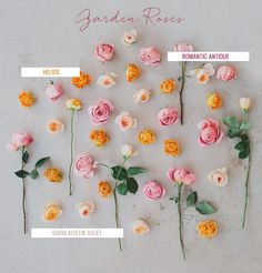garden roses - a favorite of ours
