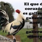 Dichos De Galleros Con Gallos Giros Para Facebook Game Birds, Roosters, Hens, Farming, Owl, Chicken, Facebook, Happy, The World