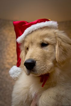 Adorable family pet photo for Christmas!!