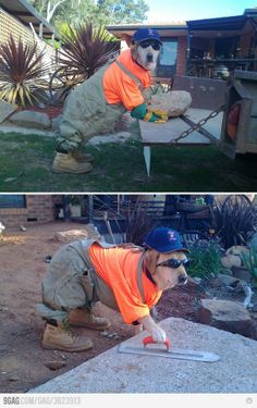 My Job On Pinterest Brick Cement And Working Dogs