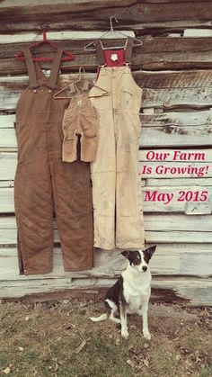 Farm baby announcement!