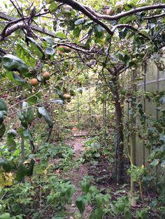overwoekerde tuin bij aankoop