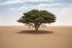 A lone tree in a massive wasteland. Tree is maybe 40 ft high. Morocco, Sahara Desert.  [3000x2000] - Nature/Landscape Pictures