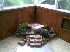 House rabbit litter garden. Rabbit safe herbs http://kanin.org/node/191