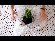 DIY hanging kokedama (Japanese Moss Balls) plant tutorial - YouTube Mélanger de l'argile et de la mousse à du terrreau