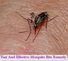Fast And Effective Mosquito Bite Remedy