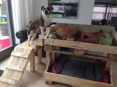 Dog bunk beds made from pallets.