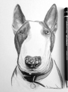 Bull Terrier Tattoo, Bull Terrier Dog, Animal Drawings, Pencil Drawings, Drawing Animals, Abstract Animal Art, English Bull Terriers, Happy Art, Pencil Portrait
