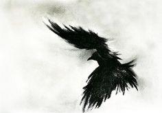 added by Bird