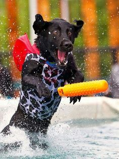 Incoming...love the expression on this dock dog's face....he is having a blast