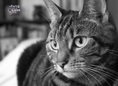 Athena in black and white  #cats #tabby