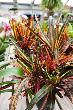 Pete's Greenhouse | Beautiful Indoor Plants | Rich Color ...