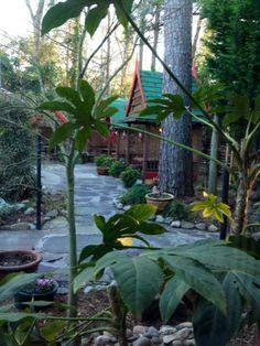 Garden Patio @ Indochine Thai Restaurant, Wilmington, NC.