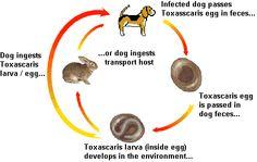 Cycle dog parasite stool - john doe carpets Cycle Dog, Parasite Cleanse, John Doe, Carpets, Stool, Health, Dogs, Farmhouse Rugs, Rugs
