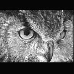Photo Realistic Pencil Drawing, 5 X 7 Giclee Fine Art Print on Polar Matte Paper,close up Owl, Cliff Sperandeo.