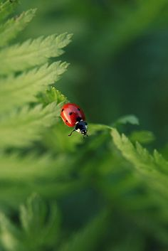 "ladybug-That is, "" my Father hath so loved you that he even loves me more for  giving my life to redeem you"