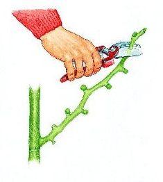 Taille des figues-fleurs - Rustica Potager Garden, Garden Planters, Garden Art, Vegetable Garden Design, Permaculture, Arm Warmers, Flower Power, Outdoor Decor, Plants