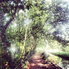 Secret pathway by Maitena Fernandez