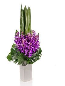 Beautiful Flowers Direct To Your Door Tall Flower Arrangements, Tall Flowers, Fresh Flowers, Beautiful Flowers, Vanda Orchids, Corporate Flowers, Bloom, Plants, Floral Arrangements