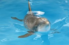 """<p>As Ric O'Barry states, """"A dolphin's smile is the greatest deception. It creates the illusion that they're always happy."""" How marine parks use this smile to their own gains.</p>"""
