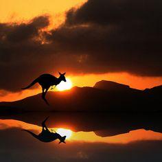 Australian Wildlife Reflection (by Heaven`s Gate (John)) Kangaroo silhouette Wildlife Photography Tips, Reflection Photography, Animal Photography, Photography Ideas, Cool Pictures, Cool Photos, Beautiful Pictures, Animal Pictures, Example Of Reflection