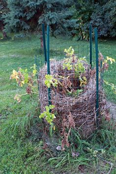 Build Your Own Spud Loving Potato Tower Every garden season I like to try something new, like growing spuds in a simple handmade potato tower. We had all the stuff in the shed and only need…