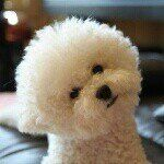 See this Instagram photo by @bichon.pposong • 62 likes