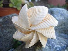 shell ornament or sculpture